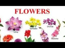 Another Word For Violet Another Word For Flowers Flowers Name English With Hindi Youtube