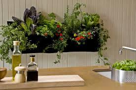 Indoor Kitchen Gardening Indoor Plant Daccor Inspires With Houseplants