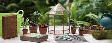 glass for terrarium