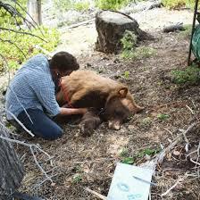 A Bear Biologist Brings Online Fans Into the Field