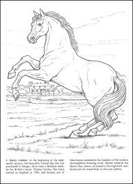 Small Picture Real Looking Horse Coloring Pages Coloring Coloring Pages