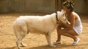 Dressé pour tuer (White Dog) (1982) de Samuel Fuller - Shangols