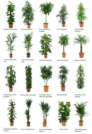 small office plant. Small Plant For Office Plants Best Ideas On O