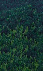 Forest wallpaper ...