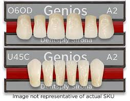 Genios Living Mold Chart With Teeth