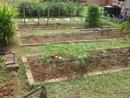 Small Picture Vegetable Garden Design Free The Garden Inspirations