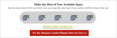 Blueberry Ripening Chart Blueberries Planting Growing And Harvesting Blueberries
