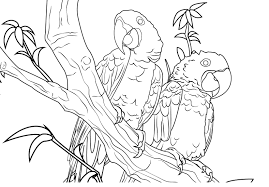 Parrots | Coloring Lovers