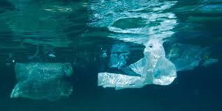 Plastikmüll Im Meer Eine Katastrophe Wwf Deutschland