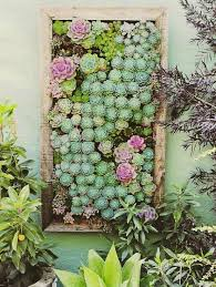 Best Succulent Container Garden Soil Mix  Shawna CoronadoSucculent Container Garden Plans