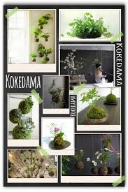 42 best Kokedama images on Pinterest | Plants, Gardening and ...