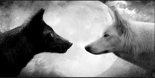 """Résultat de recherche d'images pour """"combat noir et blanc"""""""