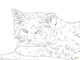 sand cat portrait three little kittens lost their mittens coloring pages cutest kitten cute