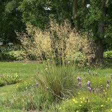 10 Siergrassen Soorten Voor Méér Rust En Eenvoud In De Tuin