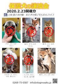 保護 犬 譲渡 会