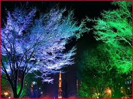 outdoor tree lighting ideas. Outdoor Tree Lighting Ideas Lights A Comfortable Best Of  F