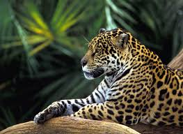 amazon river animals.  Amazon Amazon River Cruise Information  Jungle Blogjpg With Animals