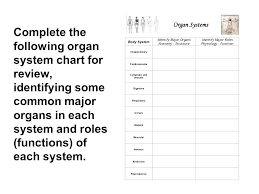 Agreeable Worksheets On Human Body Systems Free In Worksheet Library