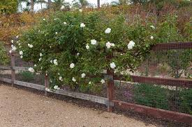 Small Picture Best Of Cool Rose Garden Design Layout 7