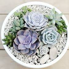 Small Picture Best 25 Succulents ideas on Pinterest Succulents garden