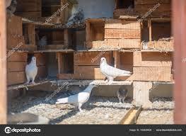 「鳩小屋」の画像検索結果