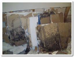 mold removal pittsburgh. Perfect Mold Mold Men Pittsburgh Black Removed On Removal L