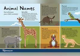 names that will pique your child s curiosity everything after z by dictionary