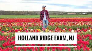 holland like tulip farm in nj