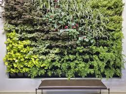 indoor plants tips and tricks for