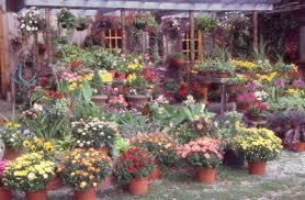 container garden design. Simple Garden Massedcontainergardening Intended Container Garden Design N