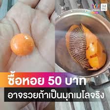 Amarin News - หนุ่มรถบรรทุกซื้อหอยกระโจงโดง 50 บาทมาต้มกิน...