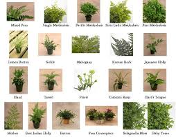types of outdoor ferns. types of ferns - google search outdoor r