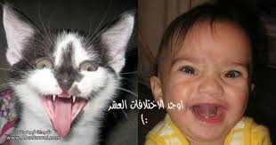 اوجه الاختلاف!!!! images?q=tbn:ANd9GcT
