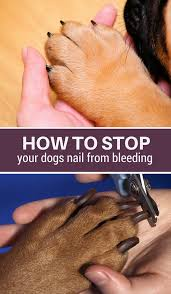 how to stop dog nail bleeding pin it please share with your friends