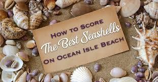 Holden Beach Tide Chart July 2017 How To Score The Best Seashells On Ocean Isle Beach