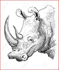 Animal Line Drawings 158268 Pencil Sketches Animals Easy Cute