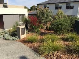 garden australian native garden