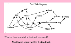 What do the arrows in a food chain represent? | Socratic