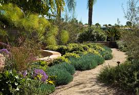 Small Picture Drought Tolerant Garden Design By Eckersley Garden Architecture