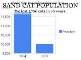 Sand Cat Population Bing Images Sand Cat Cats