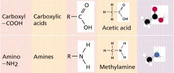 Solubility Of Organic Compounds In Water Chart Chemistry Ii Water And Organic Molecules
