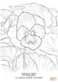Small Picture Illinois State Flower coloring page Free Printable Coloring Pages