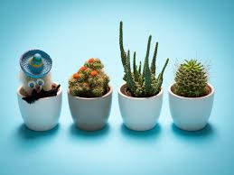30 great tiny planters you can make