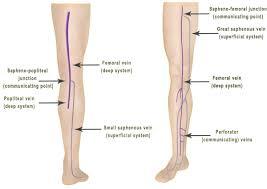 Leg Vein Anatomy Los Angeles Arterial Leg Information
