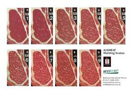 Japanese Beef Grading Chart Sher Wagyu Grading Marbling Sher Wagyu Beefcorp