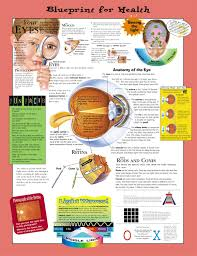 Blueprint For Health Your Eyes Anatomical Chart Laminated