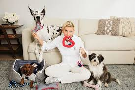 The Best Dog Clothing Brands For Stylish Pet Clothes