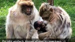 Affenpark eckenhagen preise