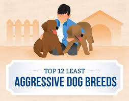 Top 12 Least Aggressive Dog Breeds Canna Pet