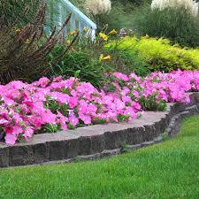 pink plants in flower bed